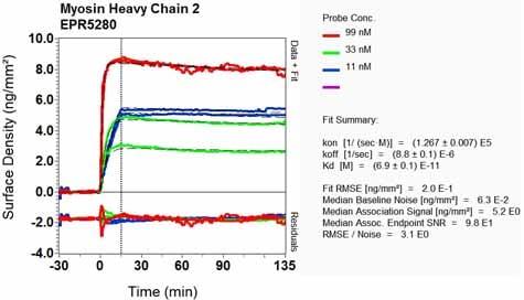 Other - Anti-MYH2 antibody [EPR5280] (ab124937)