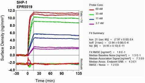 OI-RD Scanning - Anti-SHP1 antibody [EPR5519] (ab124942)