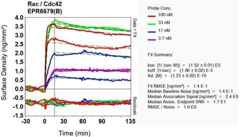 OI-RD Scanning - Anti-RAC3 antibody [EPR6679(B)] (ab124943)