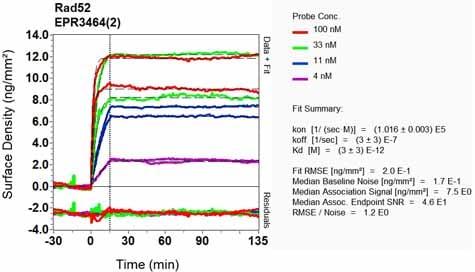 OI-RD Scanning - Anti-RAD52 antibody [EPR3464(2)] (ab124971)