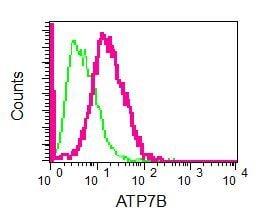 Flow Cytometry - Anti-ATP7b antibody [EPR6794] (ab124973)