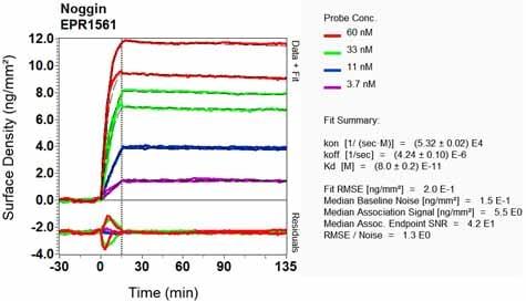 OI-RD Scanning - Anti-Noggin antibody [EPR1561] (ab124977)