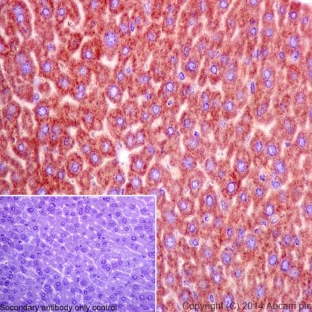 Immunohistochemistry (Formalin/PFA-fixed paraffin-embedded sections) - Anti-Cofilin antibody [EPR6375] - Loading Control (ab124979)
