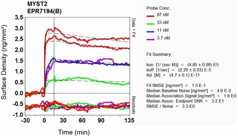 Other - Anti-KAT7 / Hbo1 / MYST2 antibody [EPR7194(B)] (ab124993)