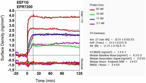 OI-RD Scanning - Anti-Elongation factor 1-gamma antibody [EPR7200] (ab124994)
