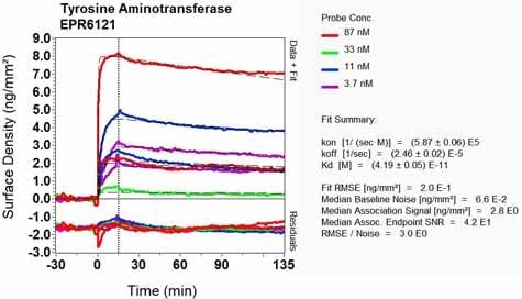 Other - Anti-ATTY antibody [EPR6121] (ab125000)