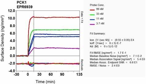 Other - Anti-PCK1/PEPC antibody [EPR6939] (ab125003)