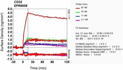 Other - Anti-CD32A + CD32C antibody [EPR6658] (ab125013)