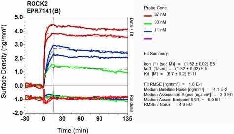 Other - Anti-ROCK2 antibody [EPR7141(B)] (ab125025)