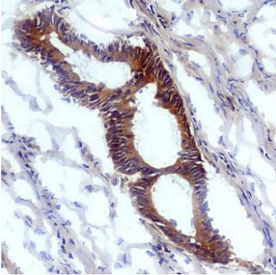 Immunohistochemistry (Frozen sections) - Anti-Nitrotyrosine antibody [EM-30] (ab125106)