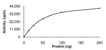 Functional Studies - Recombinant human TYK2 protein (ab125539)