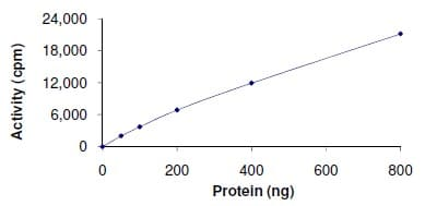 Functional Studies - Recombinant human VRK1 protein (ab125555)