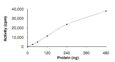 Functional Studies - Recombinant human TLK1 protein (ab125563)