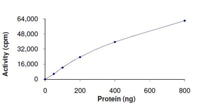 Functional Studies - Recombinant human PDK2 protein (ab125592)