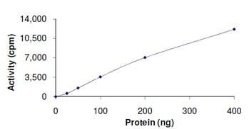 Functional Studies - Recombinant human PLK3 protein (ab125627)