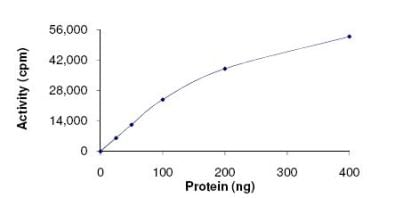 Functional Studies - Recombinant human MNK1 protein (ab125635)