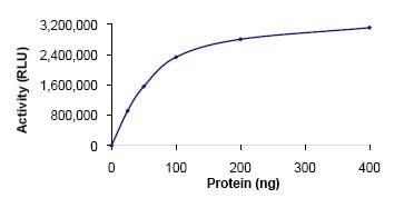 Functional Studies - Recombinant human SPHK1 protein (ab125662)