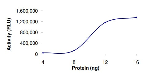 Functional Studies - Recombinant human PDE3B protein (ab125784)