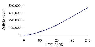 Functional Studies - Recombinant human PAK1 protein (ab125805)