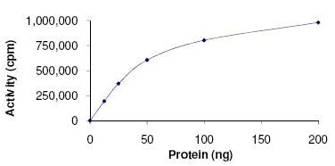 Functional Studies - Recombinant human ROCK2 protein (ab125828)
