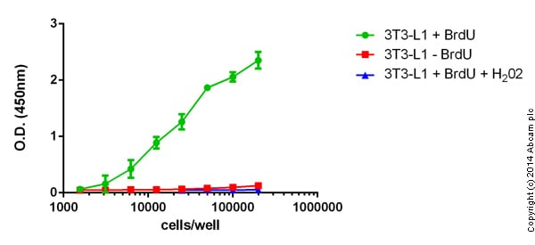 Indirect ELISA - ab126556 BrdU Cell Proliferation ELISA Kit (colorimetric)