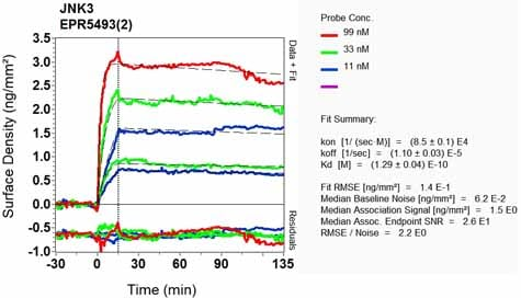 OI-RD Scanning - Anti-JNK3 antibody [EPR5493(2)] (ab126591)
