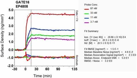 Other - Anti-GABARAPL2/GATE-16 antibody [EP4808] (ab126607)
