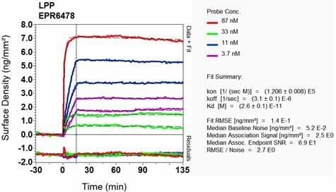 OI-RD Scanning - Anti-LPP antibody [EPR6478] (ab126608)