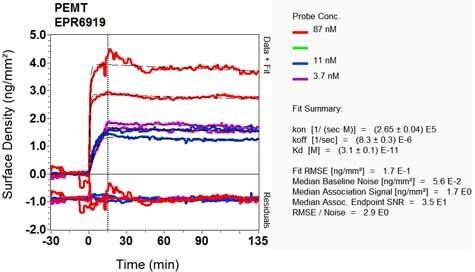 Other - Anti-PEAMT antibody [EPR6919] (ab126610)