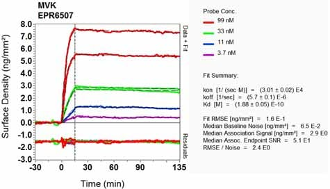 Other - Anti-MVK antibody [EPR6507] (ab126619)