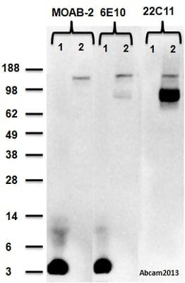 Western blot - Anti-beta Amyloid antibody [MOAB-2] (ab126649)