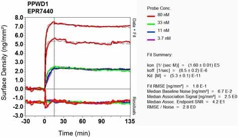 Other - Anti-PPWD1 antibody [EPR7440] (ab126710)