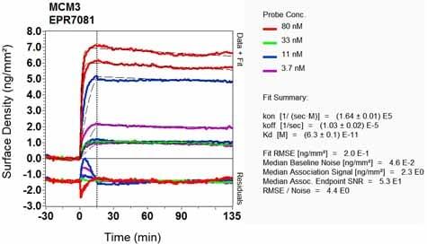 Other - Anti-MCM3 antibody [EPR7081] (ab126723)