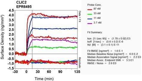 OI-RD Scanning - Anti-CLIC2 antibody [EPR6495] (ab126727)