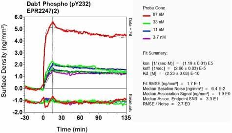 Other - Anti-Dab1 (phospho Y232) antibody [EPR2247(2)] (ab126728)