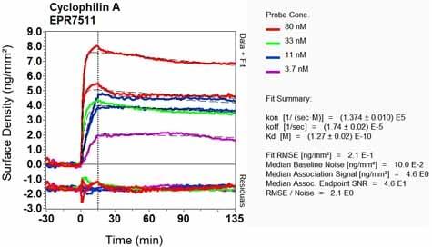 Other - Anti-Cyclophilin A antibody [EPR7511] (ab126738)