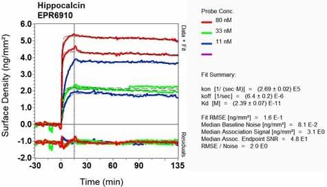 Other - Anti-Hippocalcin antibody [EPR6910] (ab126740)
