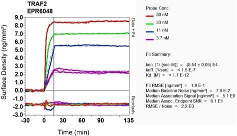Other - Anti-TRAF2 antibody [EPR6048] (ab126758)