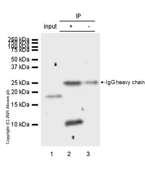 Immunoprecipitation - Anti-CXCL5 antibody [EPR4450(2)] (ab126763)