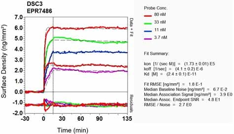 OI-RD Scanning - Anti-Desmocollin 3 antibody [EPR7486] (ab126768)