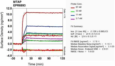 OI-RD Scanning - Anti-MTAP antibody [EPR6893] (ab126770)