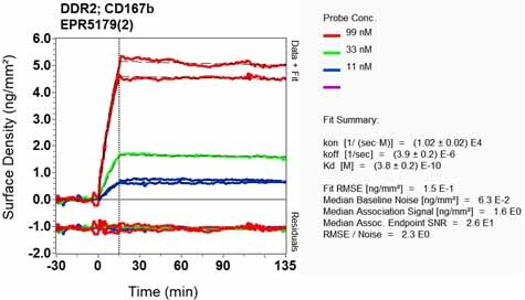 Other - Anti-DDR2 antibody [EPR5179(2)] (ab126773)