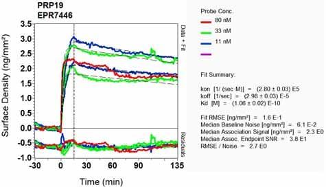 OI-RD Scanning - Anti-PRP19 antibody [EPR7446] (ab126776)