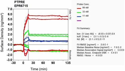 Other - Anti-PTPRE antibody [EPR6715] (ab126788)