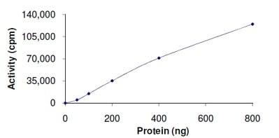 Functional Studies - Recombinant human ERK5 protein (ab126913)