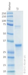 SDS-PAGE - Recombinant Human CPT1A protein (ab128569)
