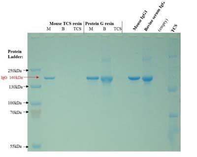 Mouse TCS Antibody Purification Kit (ab128749)