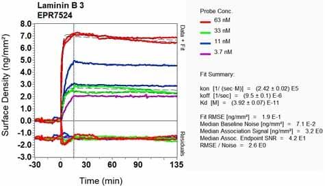Other - Anti-LAMB3 antibody [EPR7524] (ab128864)