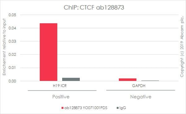 ChIP - Anti-CTCF antibody [EPR7314(B)] - ChIP Grade (ab128873)