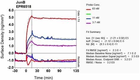 Other - Anti-JunB antibody [EPR6518] (ab128878)